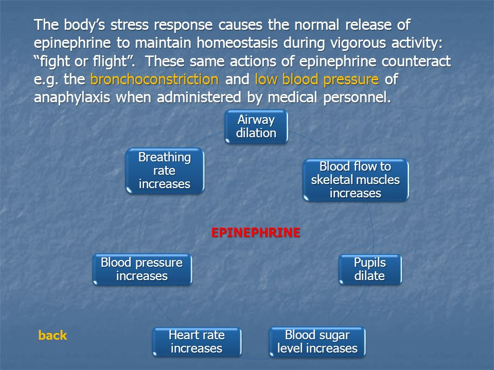 The body's stress response causes the normal release of epinephrine to maintain homeostasis during vigorous activity: fight or flight . These same actions of epinephrine counteract e.g. the bronchoconstriction and low blood pressure of anaphylaxis when administered by medical personnel.