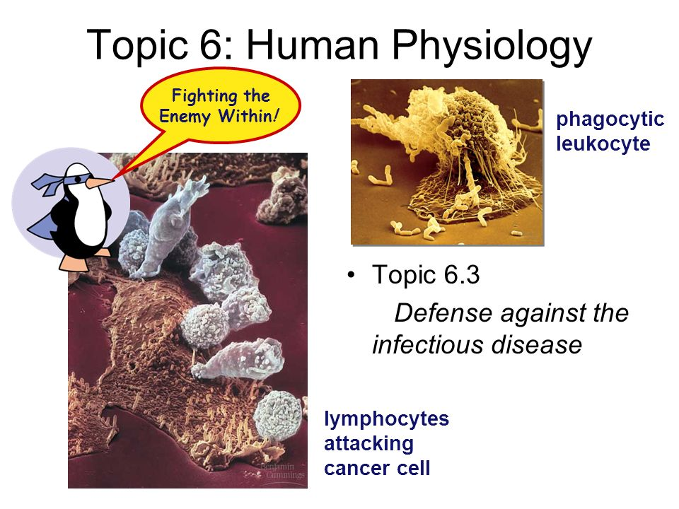 Topic 6: Human Physiology