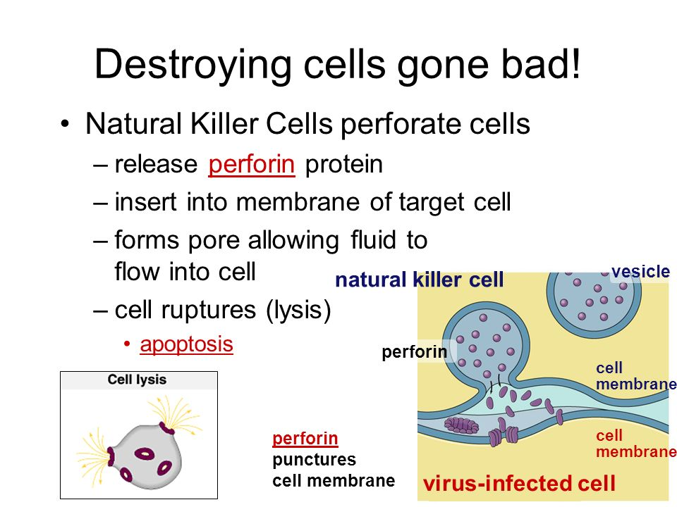 Destroying cells gone bad!