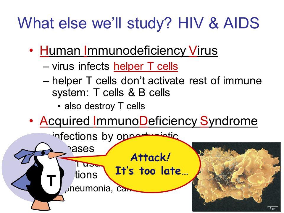 What else we'll study HIV & AIDS