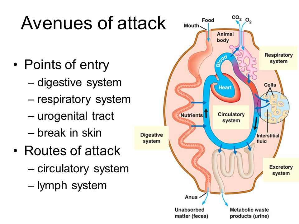 Avenues of attack Points of entry Routes of attack digestive system