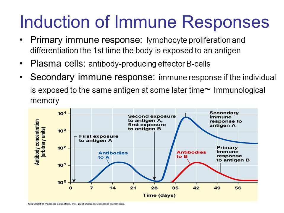 Induction of Immune Responses