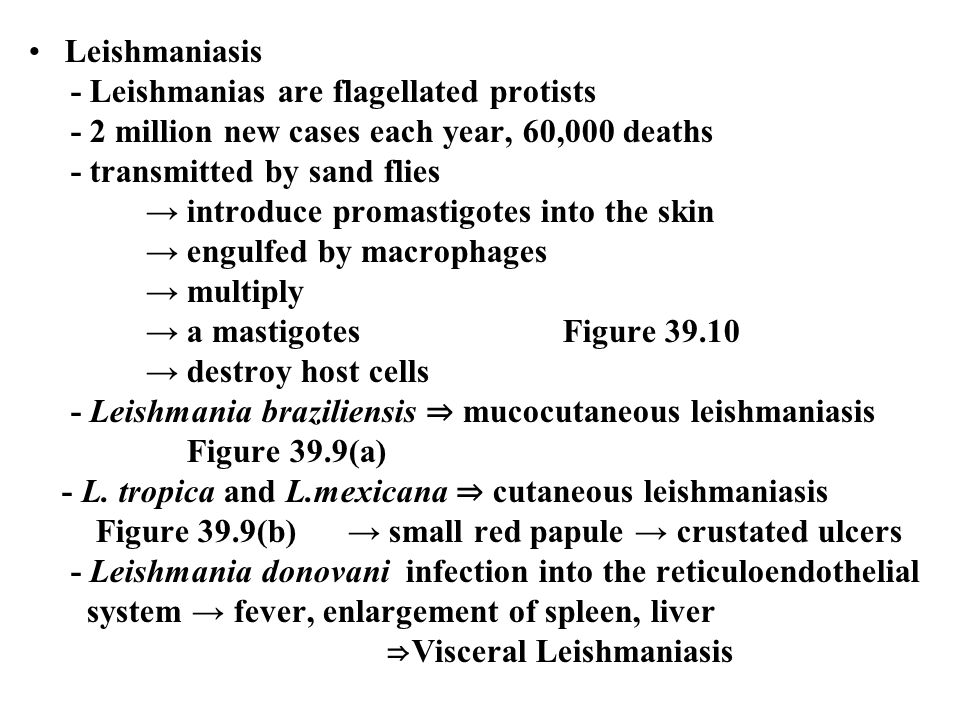 Leishmaniasis - Leishmanias are flagellated protists. - 2 million new cases each year, 60,000 deaths.