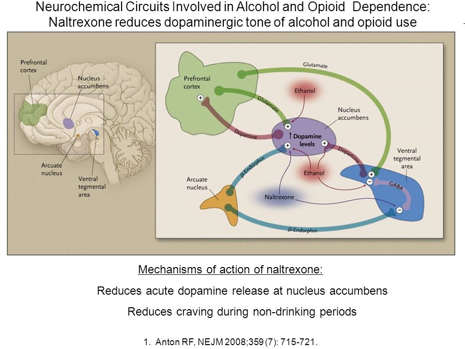 Neurochemical Circuits Involved in Alcohol and Opioid Dependence: Naltrexone reduces dopaminergic tone of alcohol and opioid use