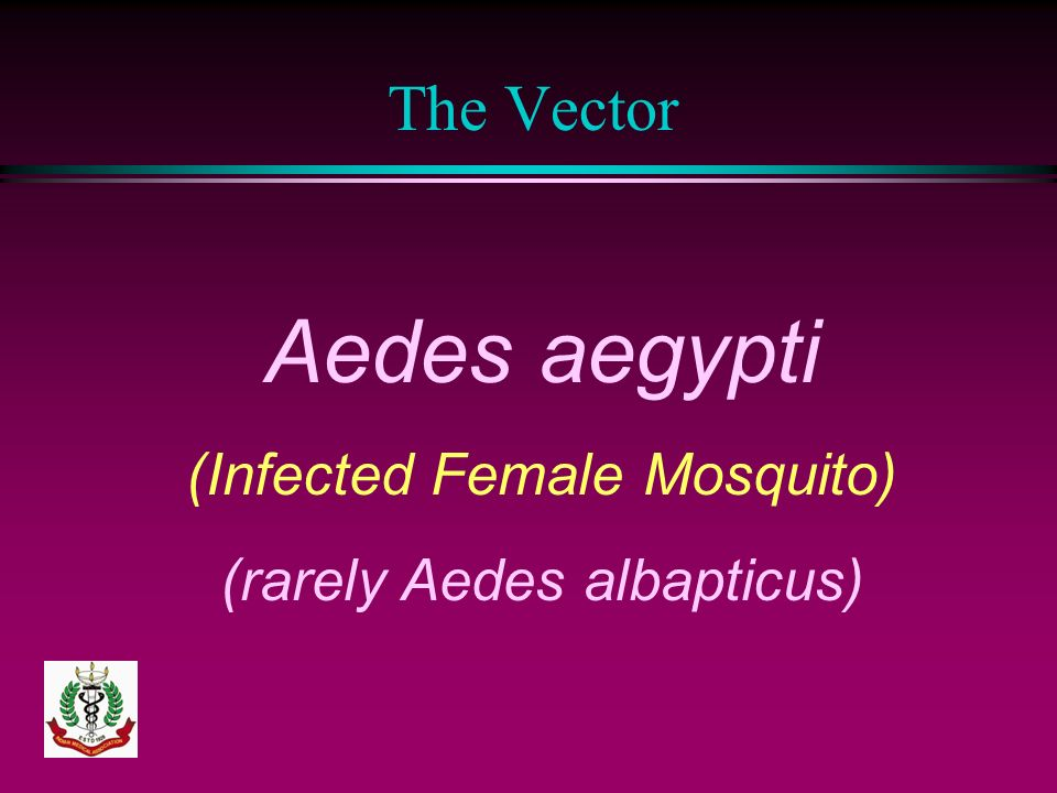 Aedes aegypti The Vector (Infected Female Mosquito)