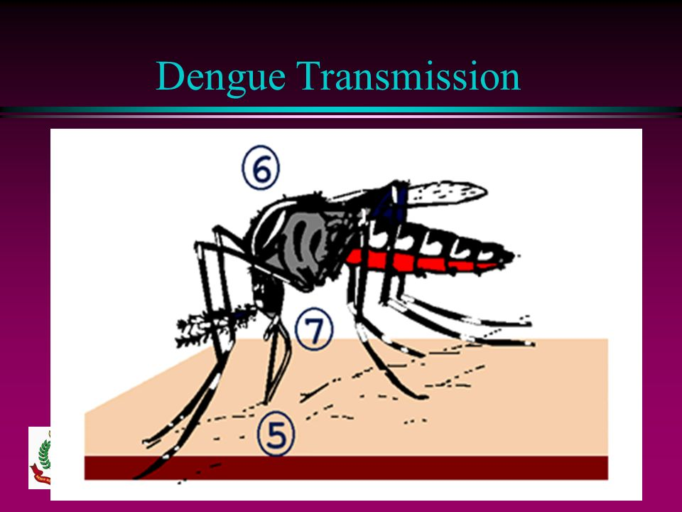 Dengue Transmission