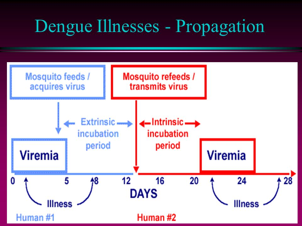 Dengue Illnesses - Propagation