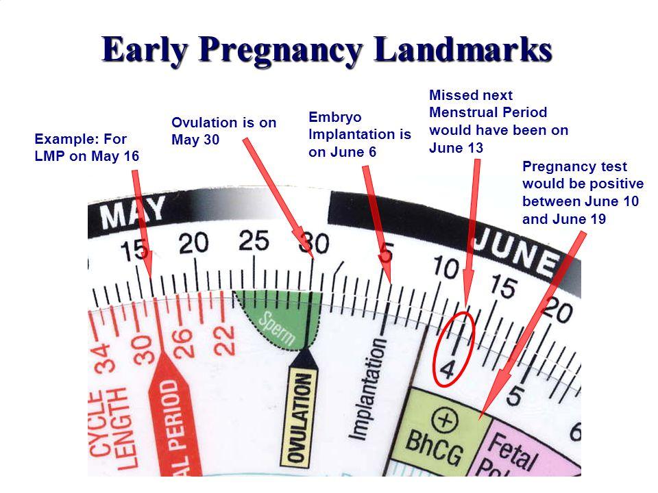 Early Pregnancy Landmarks