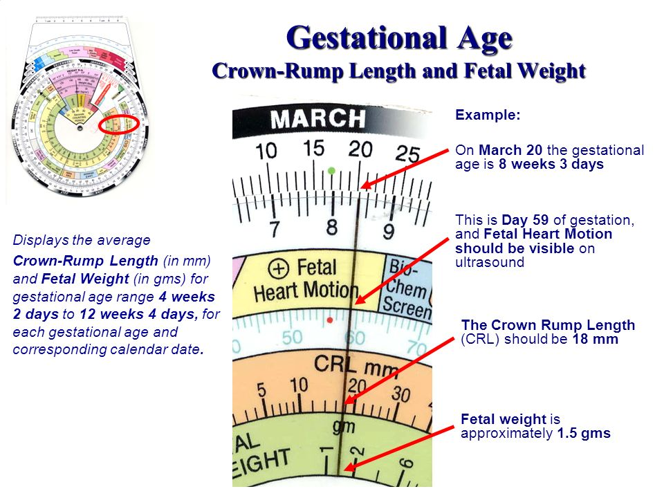 Gestational Age Crown-Rump Length and Fetal Weight