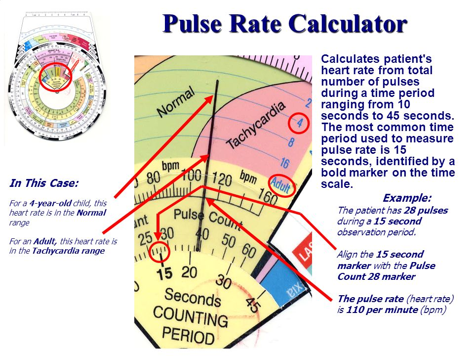 Pulse Rate Calculator Example: