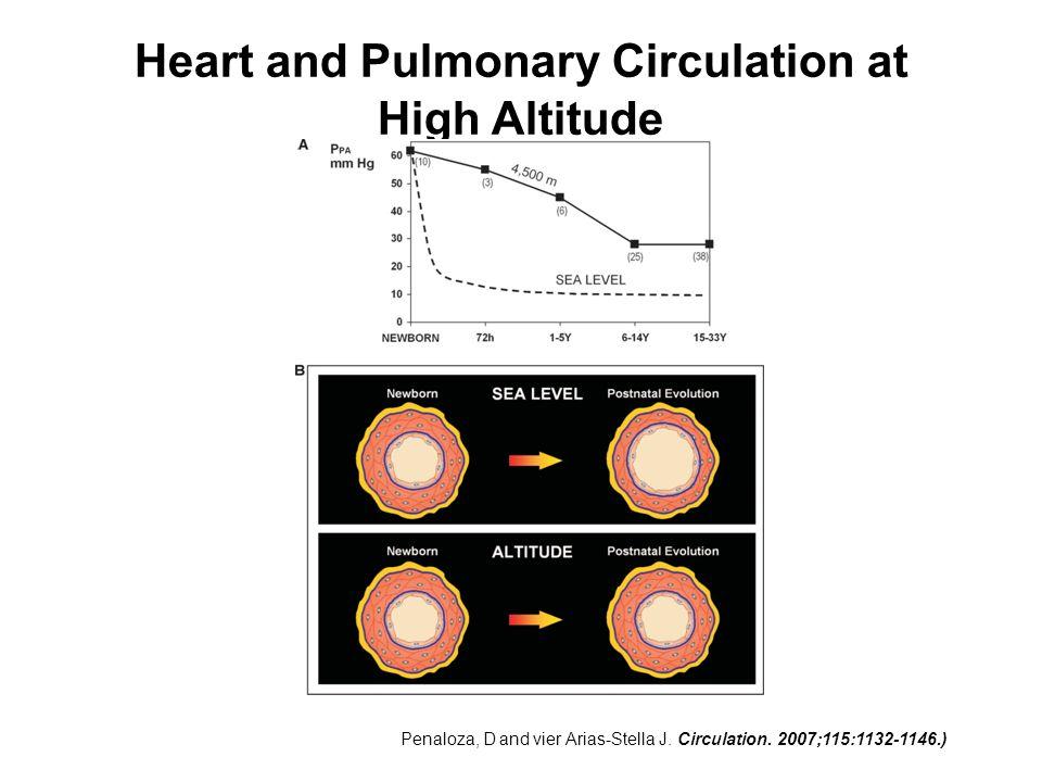 Heart and Pulmonary Circulation at High Altitude