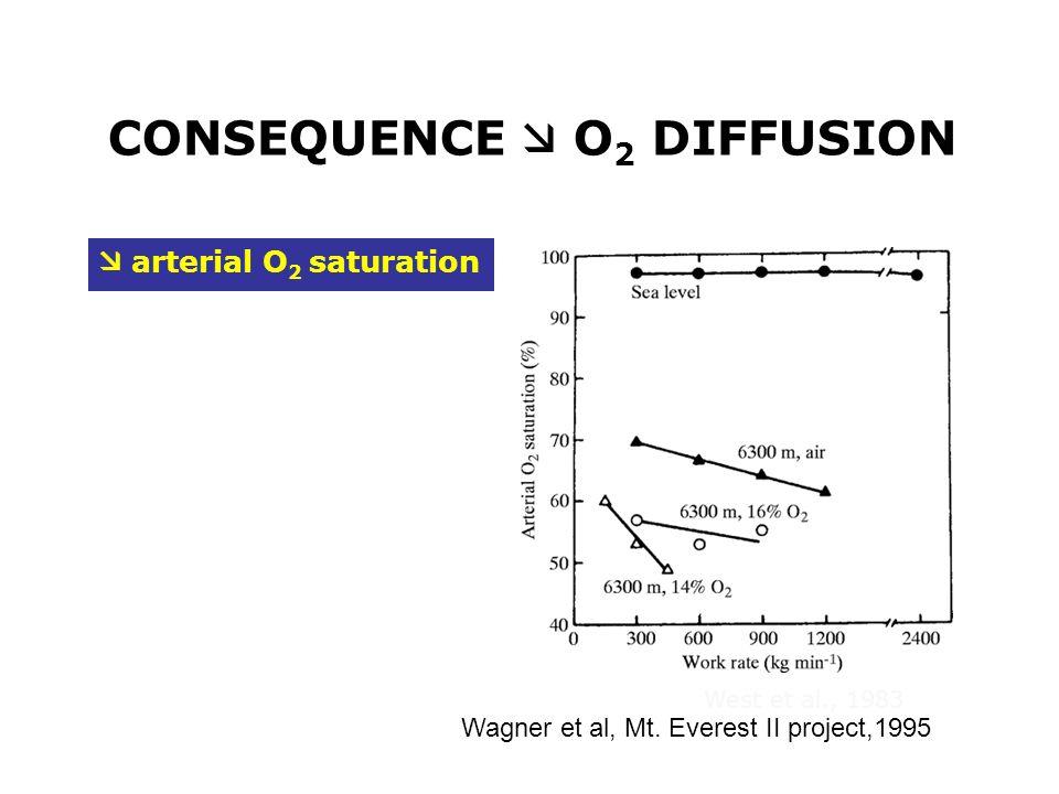 CONSEQUENCE  O2 DIFFUSION