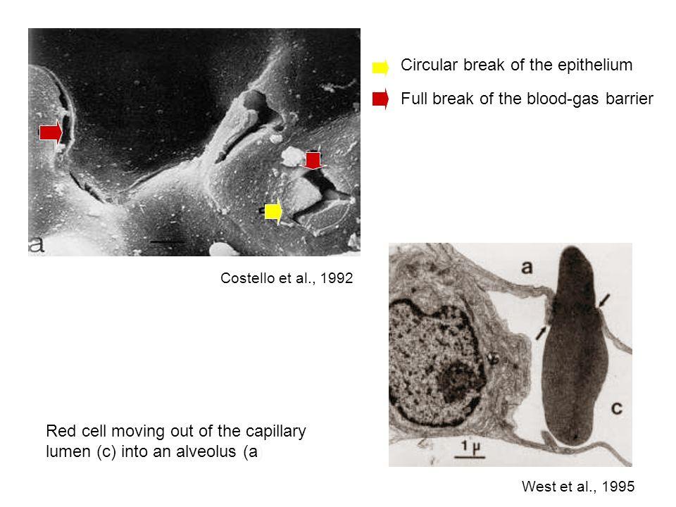 Circular break of the epithelium