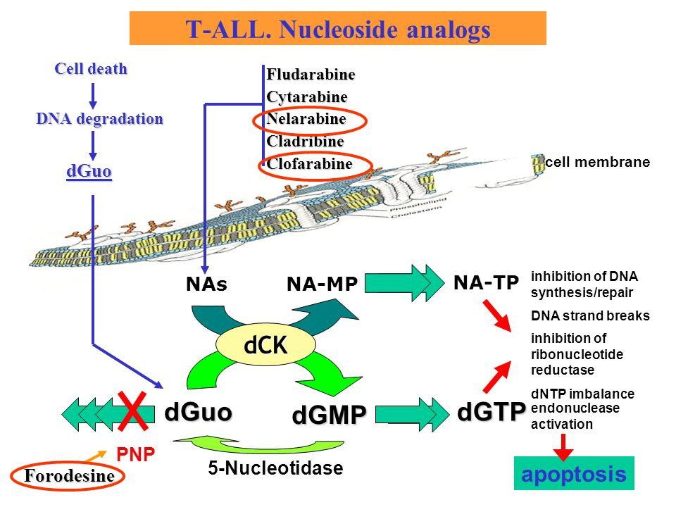 T-ALL. Nucleoside analogs
