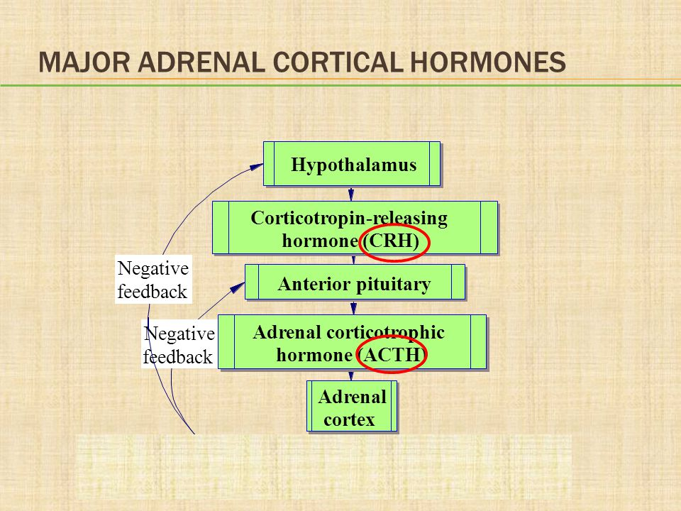 Major Adrenal Cortical Hormones