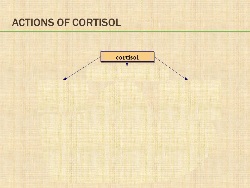 Actions of Cortisol cortisol Increases catabolism plasma immune/