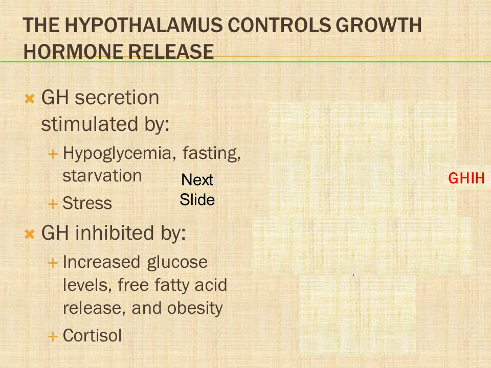 The Hypothalamus Controls Growth Hormone Release