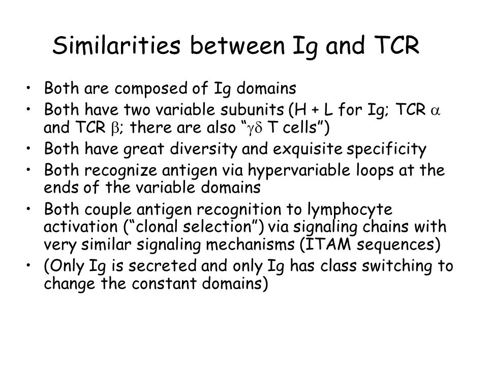 Similarities between Ig and TCR