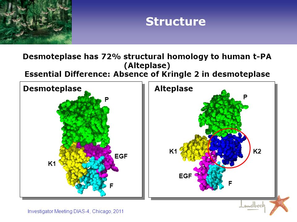 Structure Desmoteplase has 72% structural homology to human t-PA (Alteplase) Essential Difference: Absence of Kringle 2 in desmoteplase.