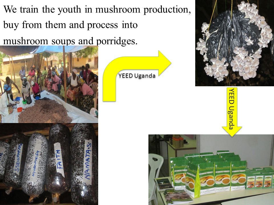 We train the youth in mushroom production, buy from them and process into mushroom soups and porridges.