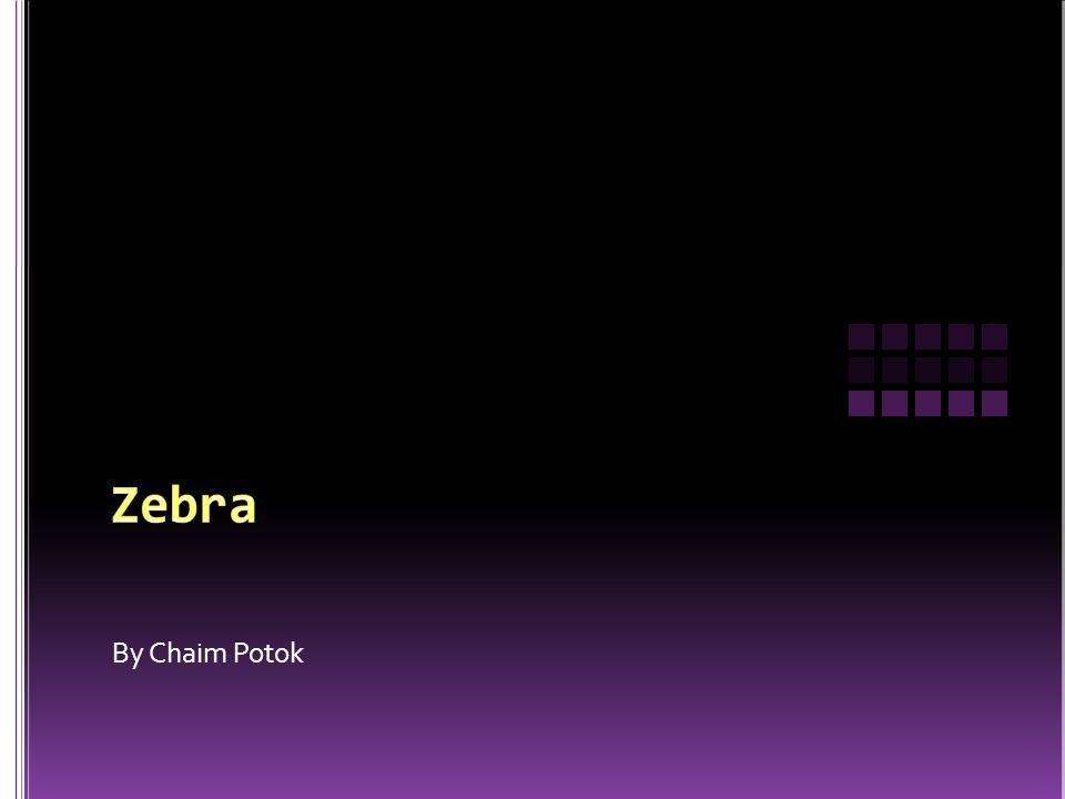 Zebra By Chaim Potok