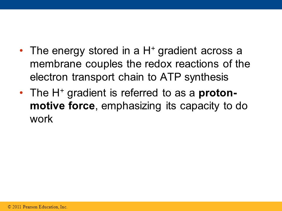The energy stored in a H+ gradient across a membrane couples the redox reactions of the electron transport chain to ATP synthesis