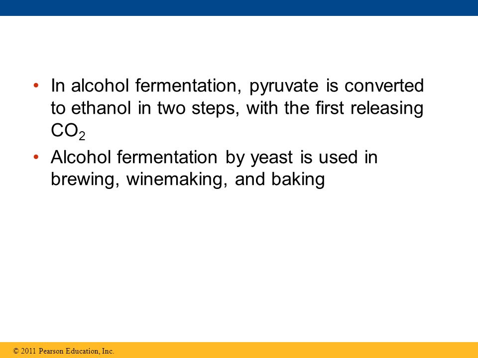 In alcohol fermentation, pyruvate is converted to ethanol in two steps, with the first releasing CO2