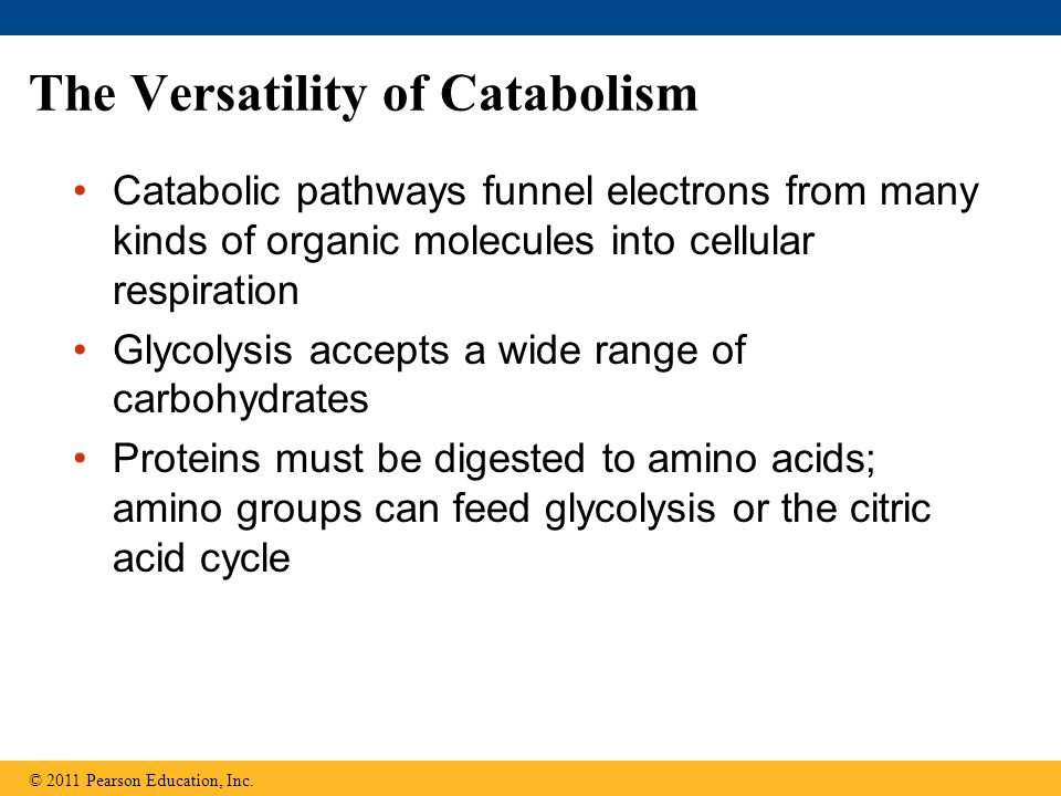 The Versatility of Catabolism