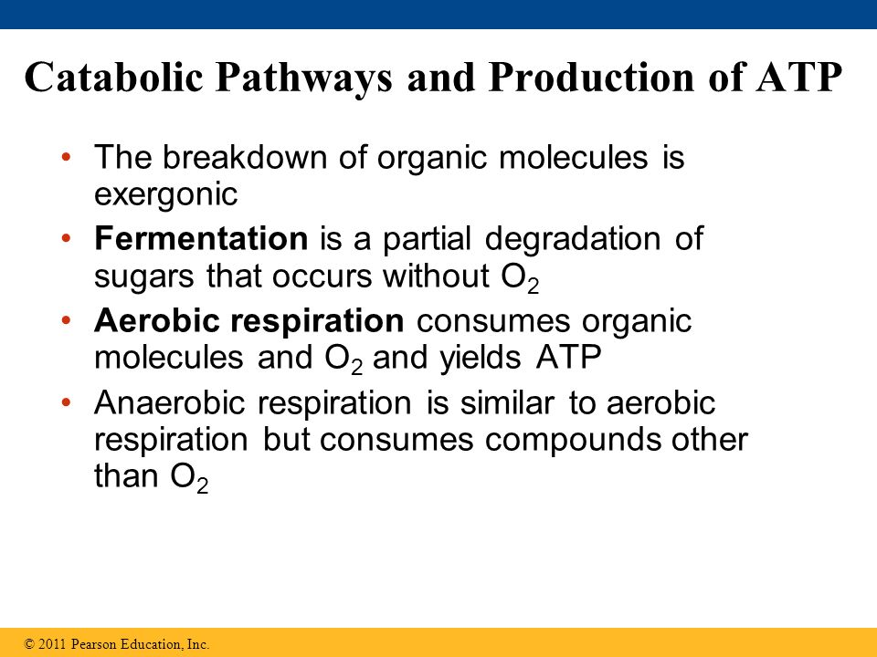 Catabolic Pathways and Production of ATP