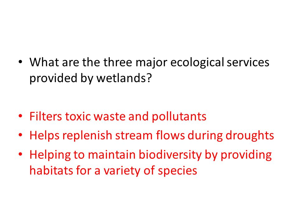 What are the three major ecological services provided by wetlands