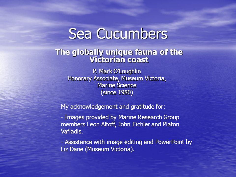 The globally unique fauna of the Victorian coast
