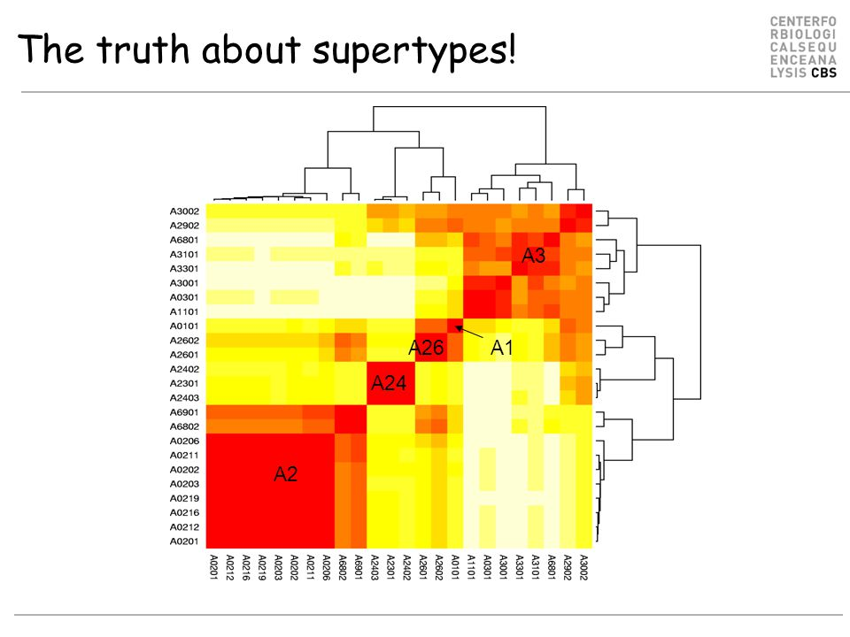 The truth about supertypes!