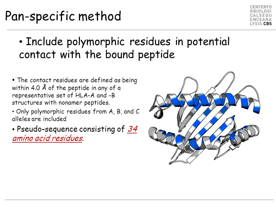 Pan-specific method Include polymorphic residues in potential contact with the bound peptide.