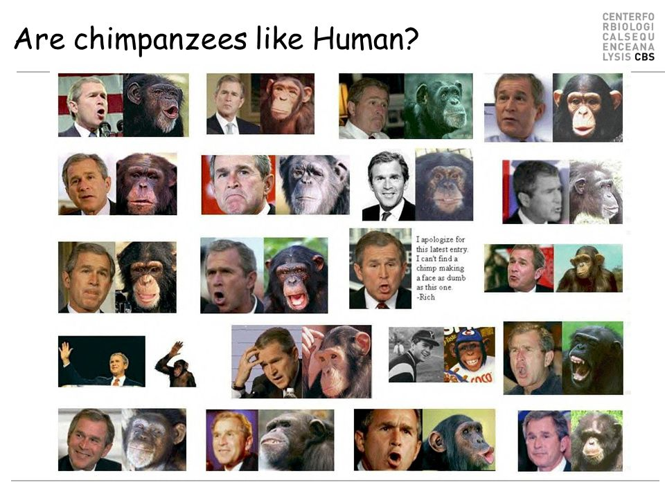 Are chimpanzees like Human