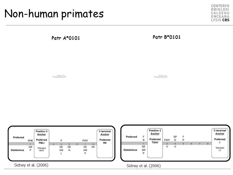 Non-human primates Patr A*0101 Patr B*0101 Sidney et al. (2006)