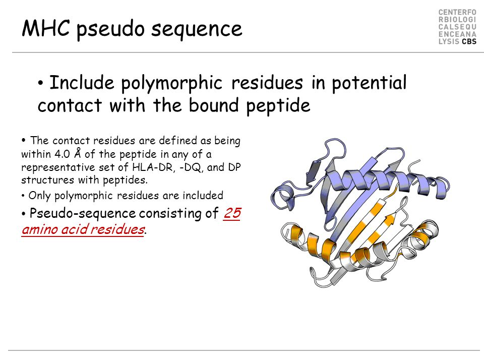 MHC pseudo sequence Include polymorphic residues in potential contact with the bound peptide.