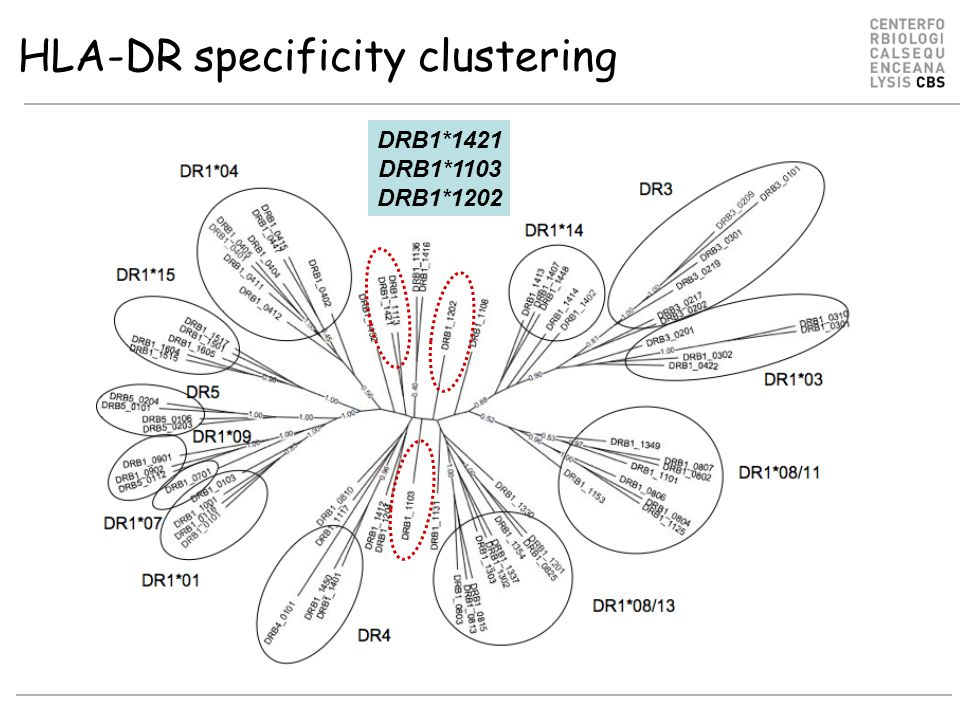 HLA-DR specificity clustering