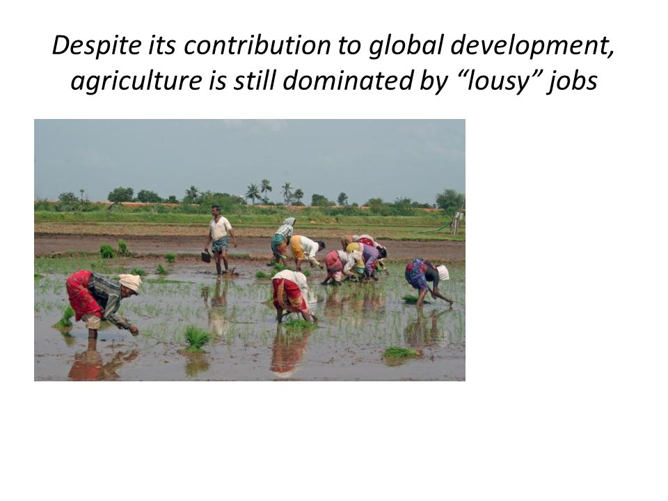 Despite its contribution to global development, agriculture is still dominated by lousy jobs
