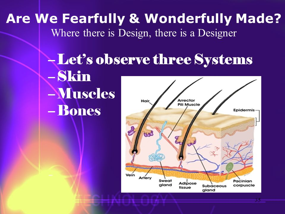 Let's observe three Systems Skin Muscles Bones