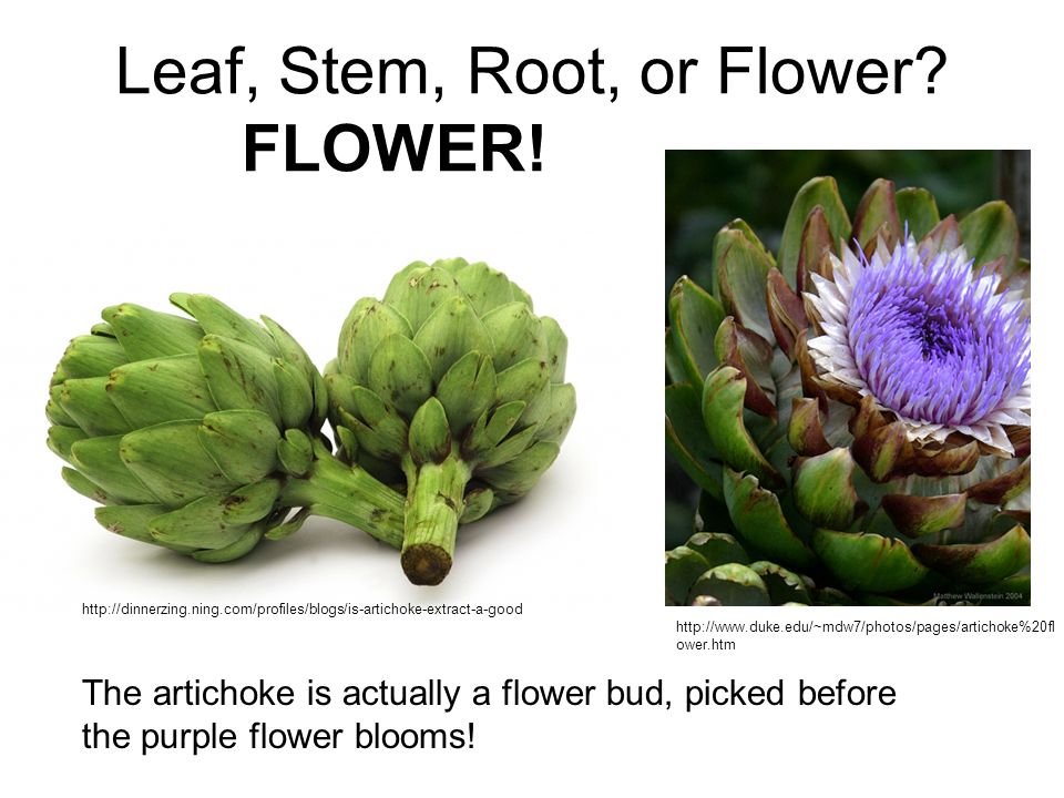 Leaf, Stem, Root, or Flower