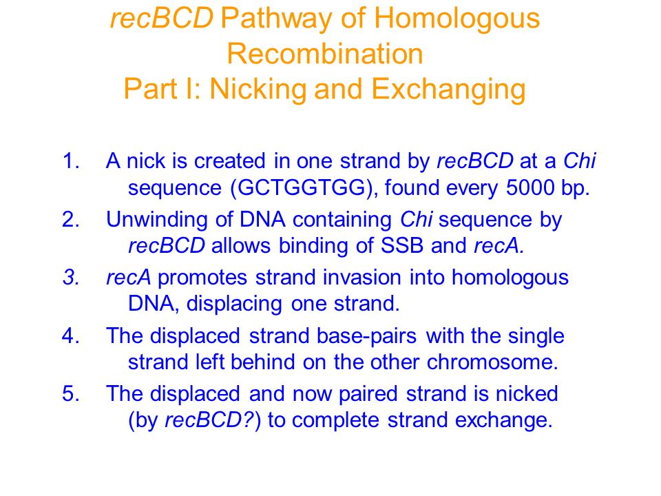 recBCD Pathway of Homologous Recombination Part I: Nicking and Exchanging