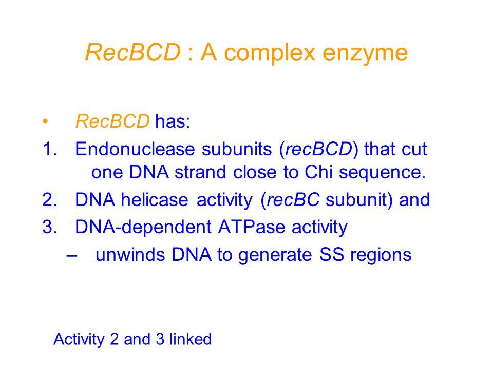 RecBCD : A complex enzyme