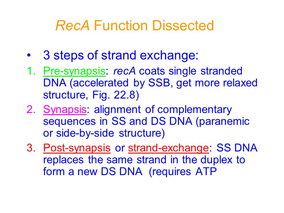 RecA Function Dissected