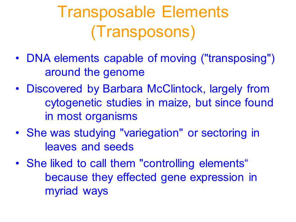 Transposable Elements (Transposons)