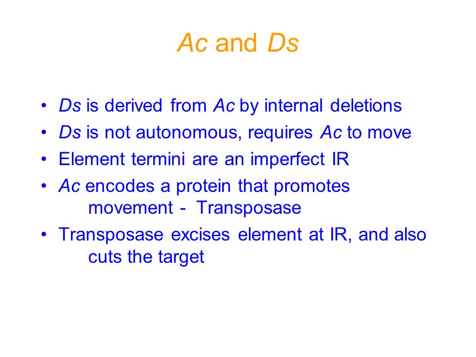 Ac and Ds Ds is derived from Ac by internal deletions