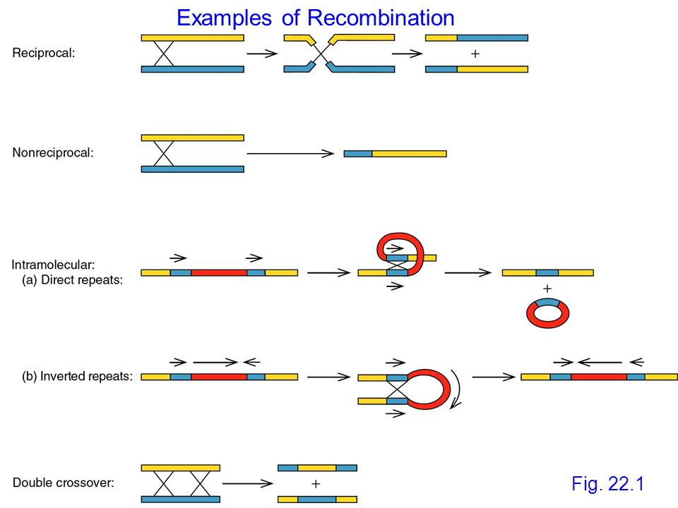 Examples of Recombination