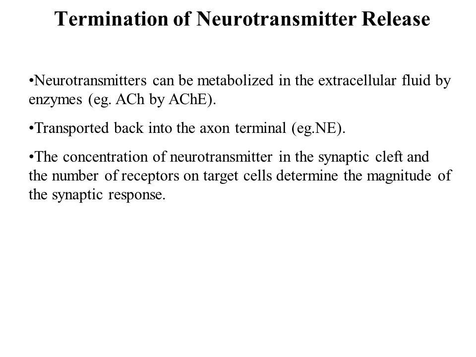 Termination of Neurotransmitter Release