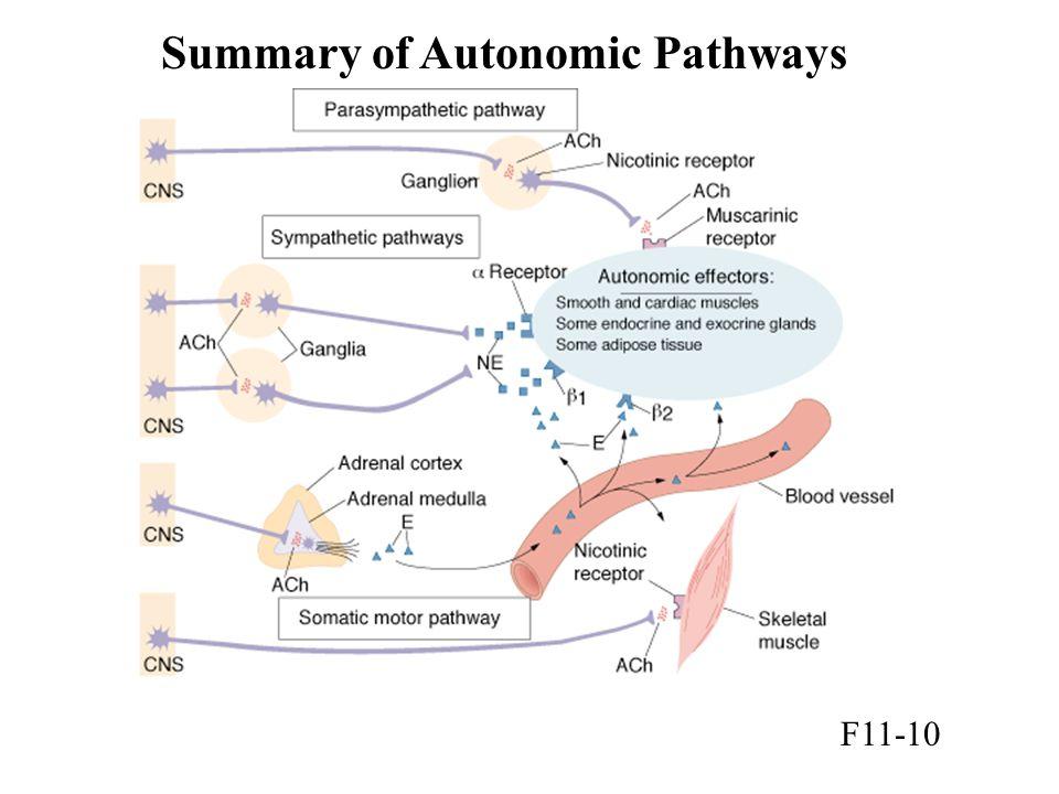 Summary of Autonomic Pathways