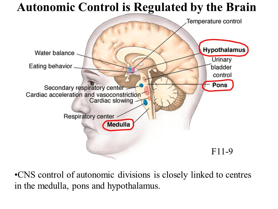 Autonomic Control is Regulated by the Brain