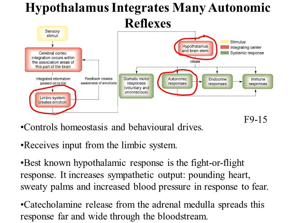 Hypothalamus Integrates Many Autonomic Reflexes